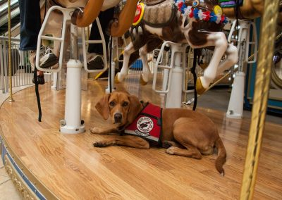 american-service-dog-at-mall-103