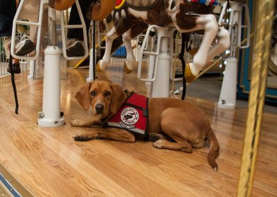 american-service-dog-at-mall-104