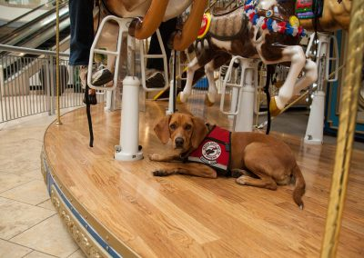 american-service-dog-at-mall-105