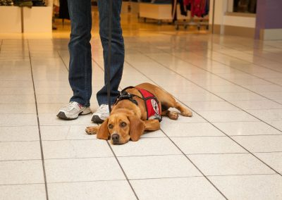 american-service-dog-at-mall-11
