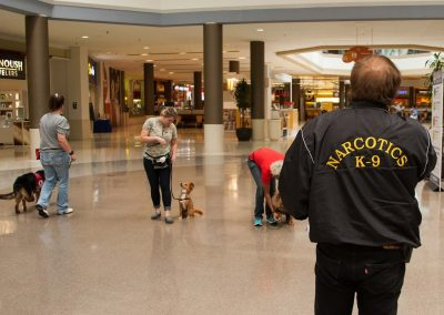 american-service-dog-at-mall-113