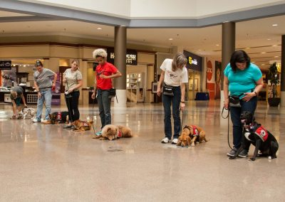 american-service-dog-at-mall-114