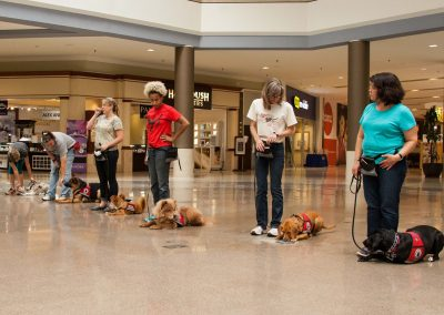american-service-dog-at-mall-115