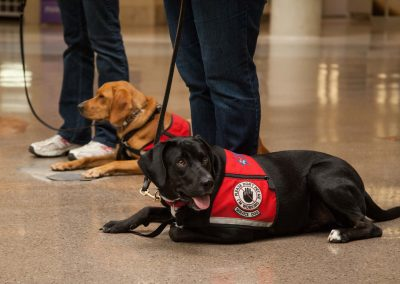 american-service-dog-at-mall-116