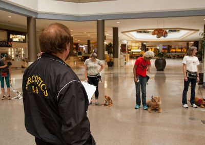 american-service-dog-at-mall-118