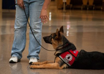 american-service-dog-at-mall-120
