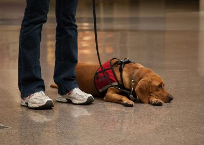 american-service-dog-at-mall-122