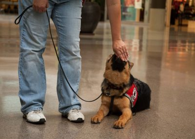 american-service-dog-at-mall-128