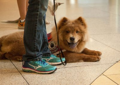 american-service-dog-at-mall-13