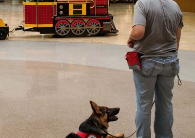 american-service-dog-at-mall-133