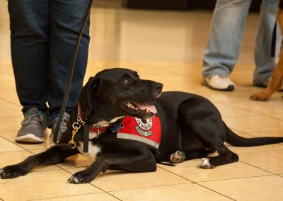 american-service-dog-at-mall-134