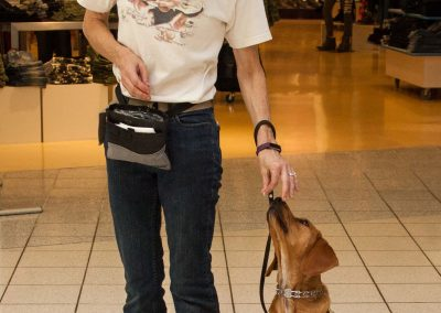 american-service-dog-at-mall-14