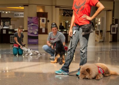 american-service-dog-at-mall-141