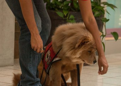 american-service-dog-at-mall-143
