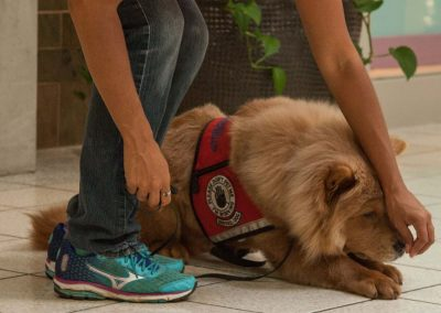 american-service-dog-at-mall-144