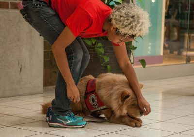 american-service-dog-at-mall-146
