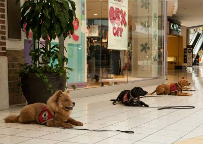 american-service-dog-at-mall-147