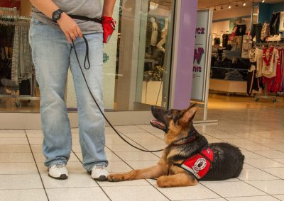 american-service-dog-at-mall-149