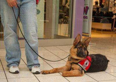 american-service-dog-at-mall-150