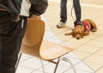 american-service-dog-at-mall-151