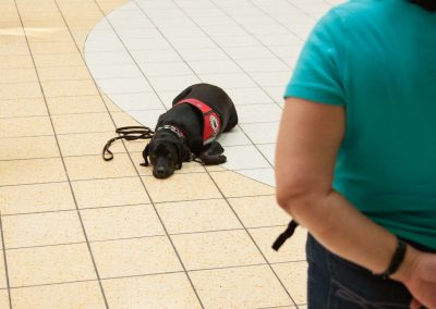 american-service-dog-at-mall-152