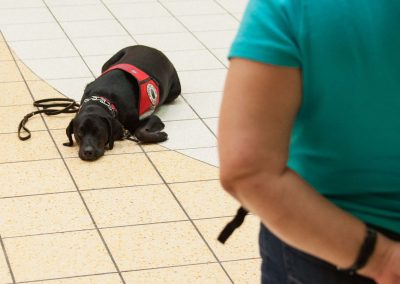 american-service-dog-at-mall-153