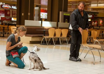 american-service-dog-at-mall-154