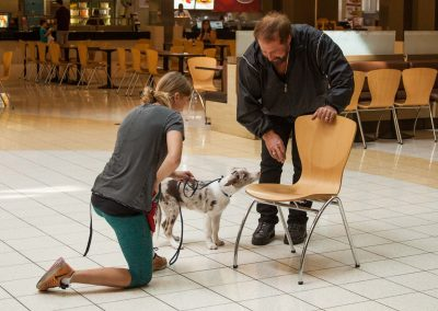 american-service-dog-at-mall-155