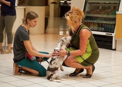 american-service-dog-at-mall-17