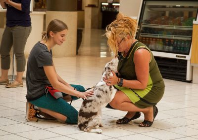 american-service-dog-at-mall-18