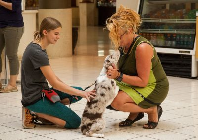 american-service-dog-at-mall-19