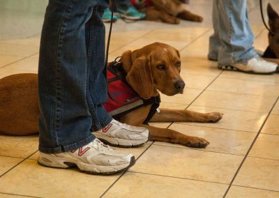 american-service-dog-at-mall-2