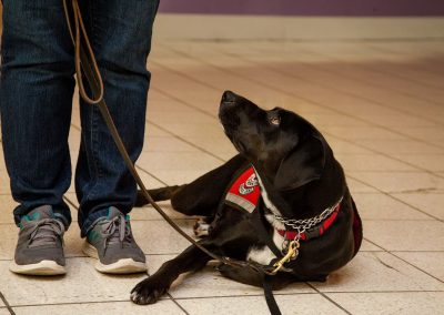 american-service-dog-at-mall-20