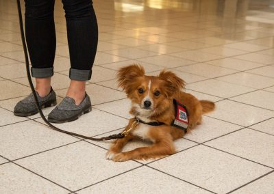 american-service-dog-at-mall-22
