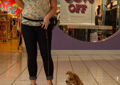 american-service-dog-at-mall-23