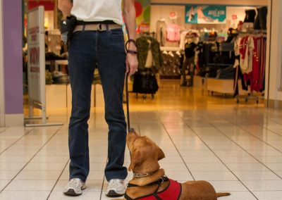 american-service-dog-at-mall-27