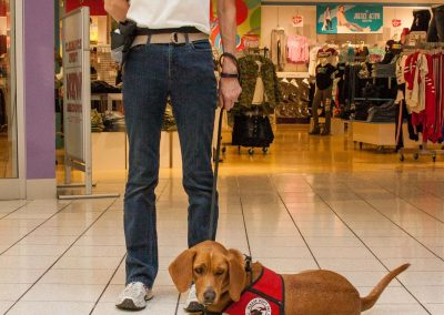 american-service-dog-at-mall-28