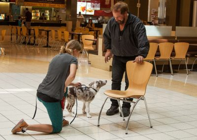 american-service-dog-at-mall-3