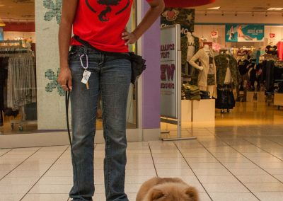 american-service-dog-at-mall-30