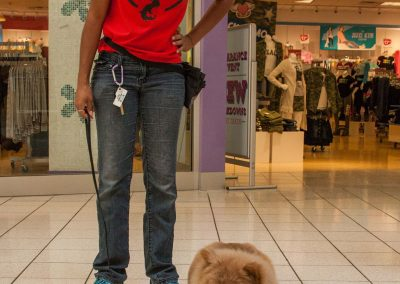 american-service-dog-at-mall-31
