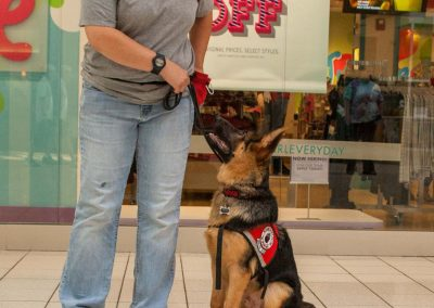 american-service-dog-at-mall-32