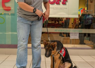 american-service-dog-at-mall-33