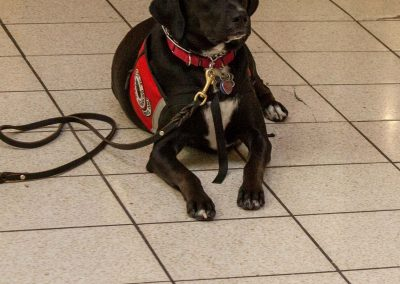 american-service-dog-at-mall-36