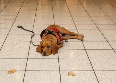 american-service-dog-at-mall-37