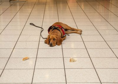 american-service-dog-at-mall-38