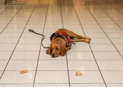 american-service-dog-at-mall-39