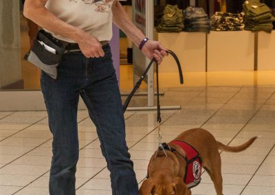american-service-dog-at-mall-40