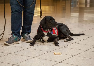 american-service-dog-at-mall-41