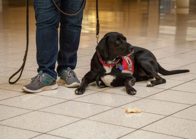 american-service-dog-at-mall-42