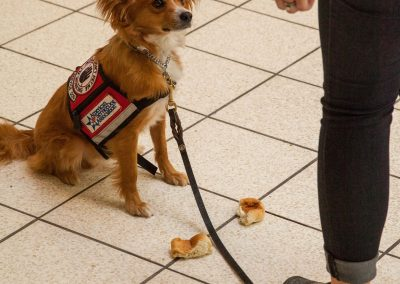 american-service-dog-at-mall-43